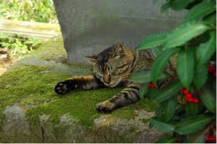 猫の脱水症状の見分け方!正しい対処法や治療法について