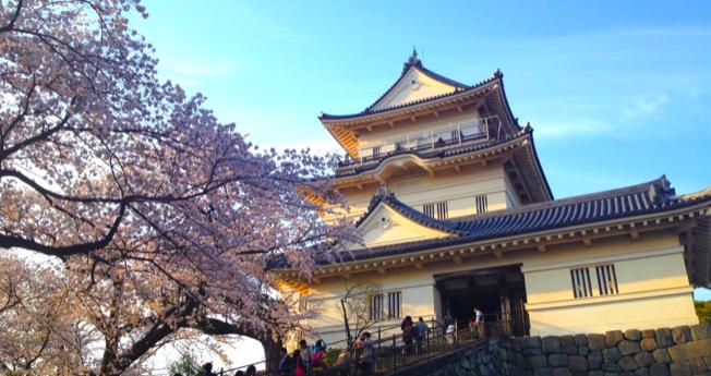 小田原城の桜開花予想2018!見頃・ライトアップ・桜まつりについて