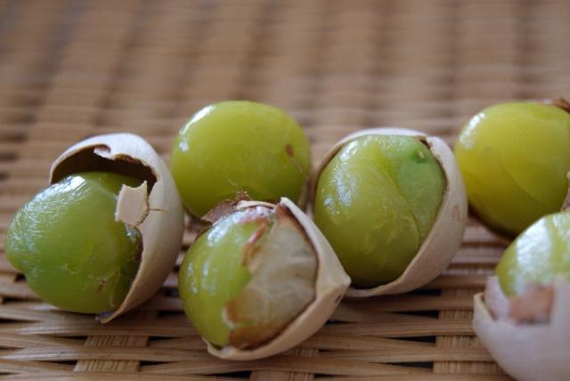 銀杏の食べ過ぎによる危険症状!何個以上食べるとヤバイのか?