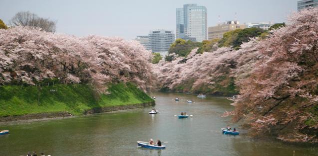 千鳥ヶ淵の桜開花情報2018!ライトアップ・ボート・おすすめルートまとめ