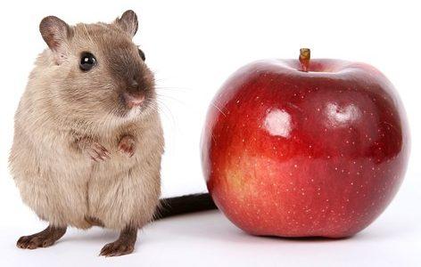ハムスターの平均寿命は何年?長生きさせるための飼育のコツについて