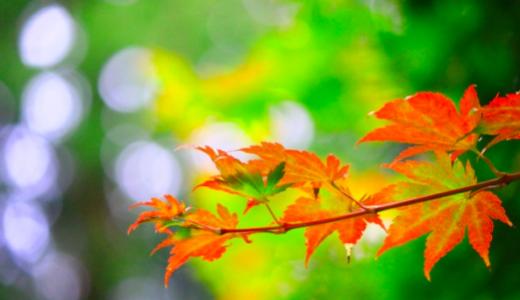 【那須高原】紅葉 見頃時期はいつ?ロープウェイ&おすすめの絶景スポットもご紹介