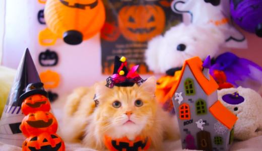 子供用ハロウィン猫仮装を100均で!~手作り方法からメイクまで~