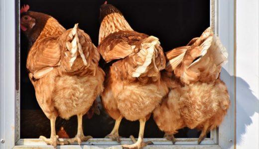鶏肉の一番安い部位ってどこ?【安くても美味しい調理法を伝授】
