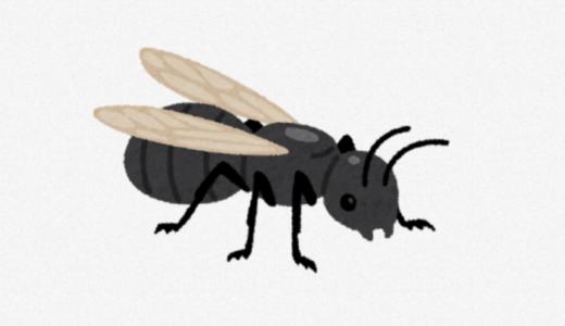 羽アリにバルサンは効果ある?効率的な3つの駆除方法!