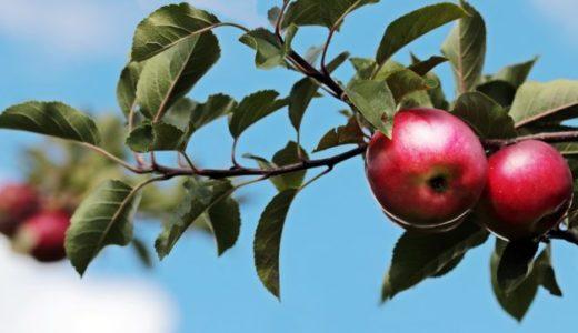 リンゴ酢の効果的な飲み方!いつ飲むのがベスト?